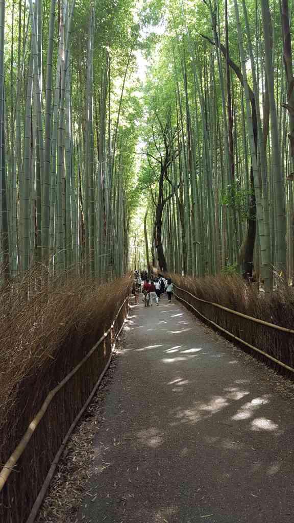 Arashiyama 2017 (23)
